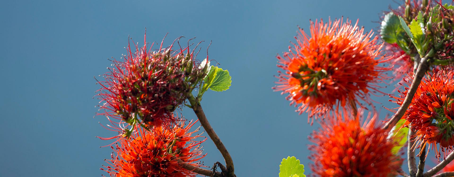RPA rośliność