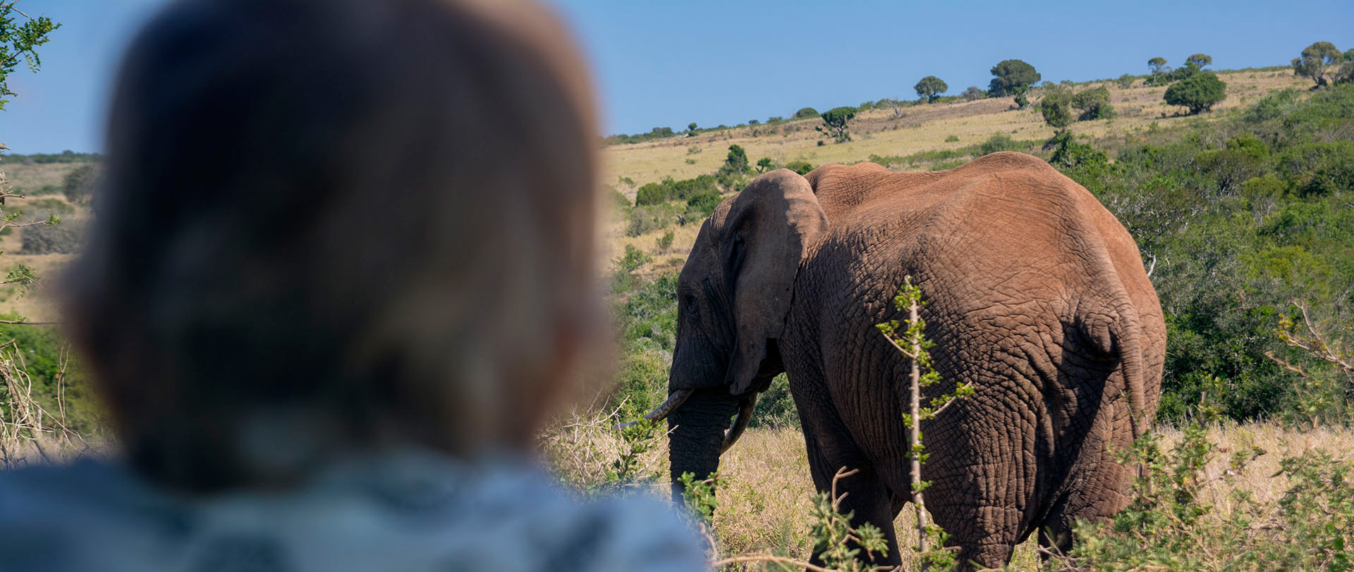 Dziecko i słoń