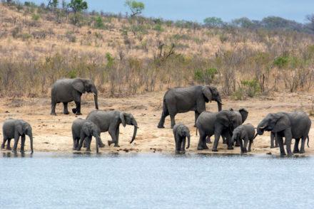 RPA - Słonie Park Krugera